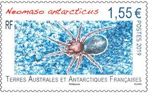 TAAF - Neomaso antarcticus