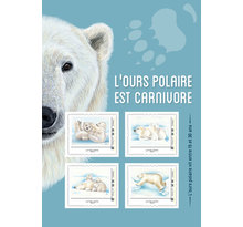 Collector - Ours polaires