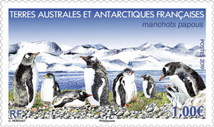 TAAF - Manchots papous