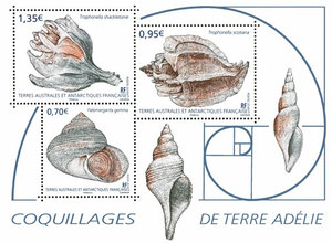 TAAF - Coquillages de Terre Adélie