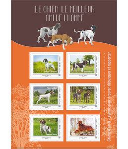 Collector- Chiens de chasse