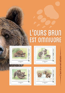Collector - Ours bruns