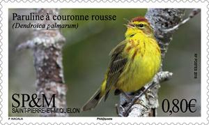 Saint-Pierre-et-Miquelon - Paruline à couronne rousse