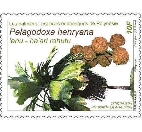Les palmiers - Pelagodoxa henryana