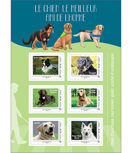 Collector - Chiens d'assistance