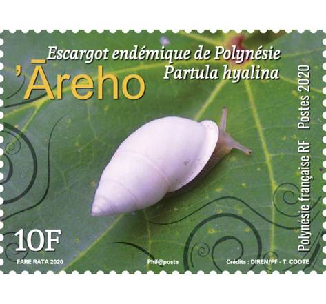 Polynésie Française - Escargot endémique - Areho