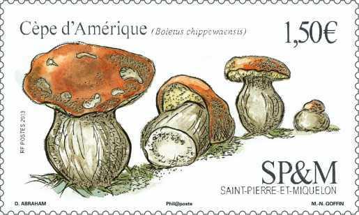 Saint Pierre et Miquelon - Le cèpe d'Amérique