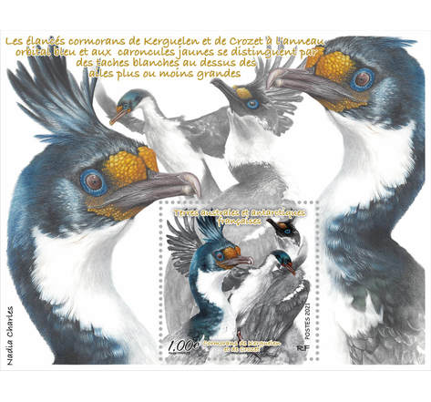 TAAF - Bloc - Cormorans de Kuerguelen et Crozet