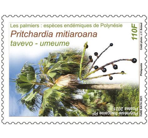 Les palmiers - Pritchardia mitiaroana