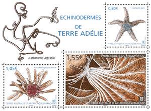 """Résultat de recherche d'images pour """"timbre Échinodermes de Terre Adélie terres Australes"""""""