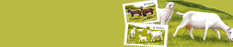 Découvrez<br/>le nouveau carnet<br/>chèvres de nos régions !